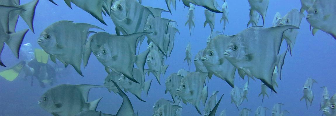 Abundant fish live